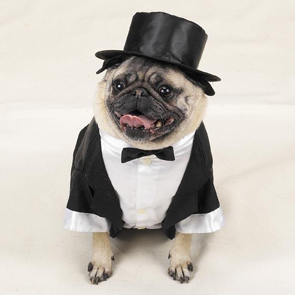 dog-tuxedo