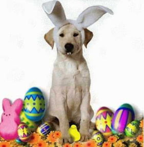 happy_easter_dogs