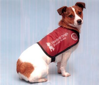 hearingdog