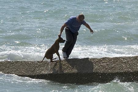 cruel_dog_treatment2