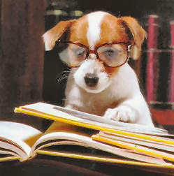 dog_studying