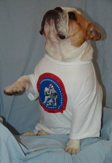 tyson-skateboarding-bulldog