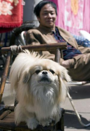 one_dog_china