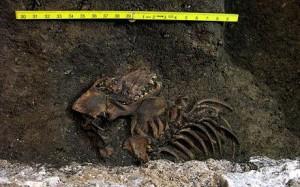 Dog-remains