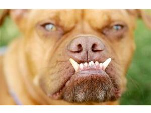 worlds-ugliest-dog