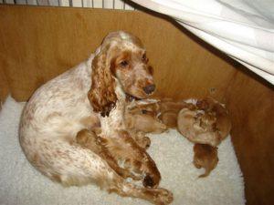 kennel-club-puppy-farm-02