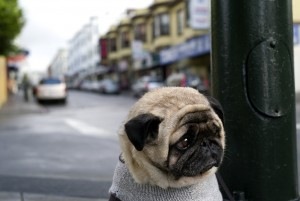 worlds_saddest_dog