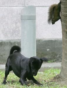 Dog attacks Squirrel