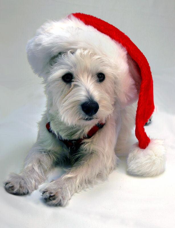 Christmasdogoutfit