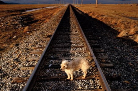 Dog on the line