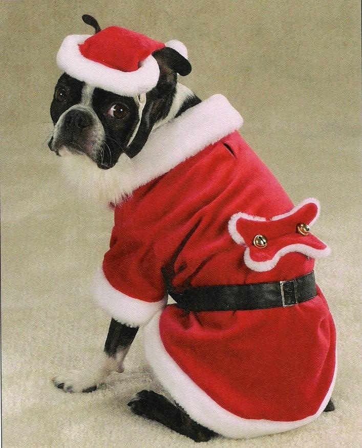 santa dog christmas outfit
