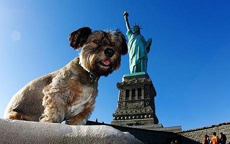 travelling dog in new york