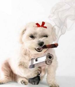 dog-with-gun