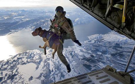 Dog does parachute jump