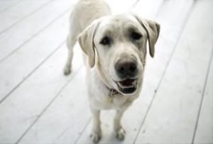 alg_dog_smiling