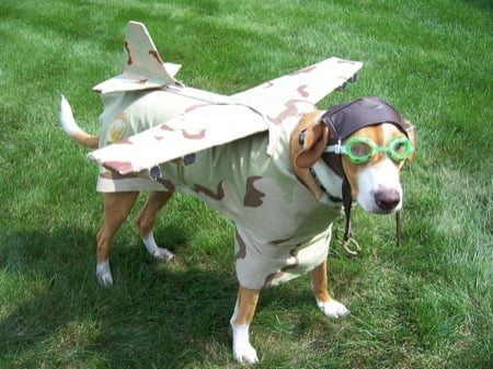 dog-in-plane-costume