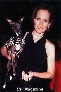 Sigourney Weaver and her Italian Greyhound