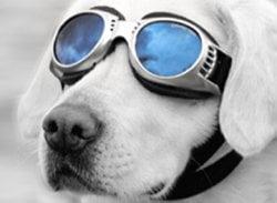 Dog_Goggles