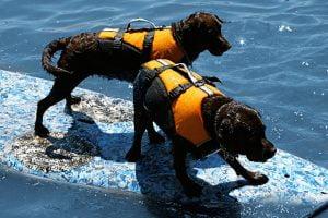Doggie Flotation Jacket