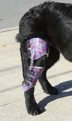 cruciate-injury-in-dog
