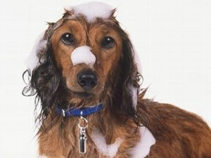dog-shampoo