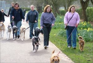 dogs being walked