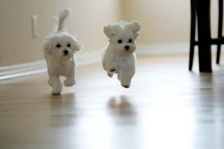 adorable-puppies
