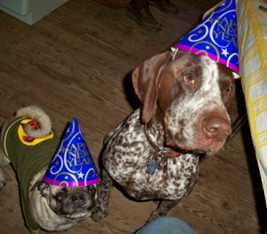 dogs partying at New Year