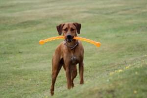 safestix-and-a-dog