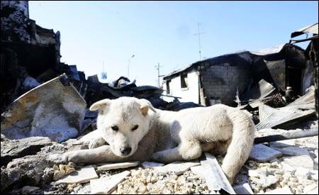 Yeonpyeong abandoned dog