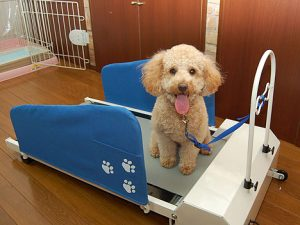 doggy-treadmill
