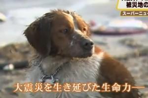 brave-dog