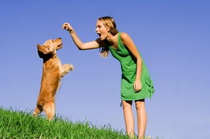 clicker training puppies