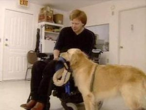 disability assistance dogs