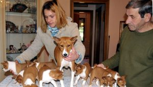 dog-breeding