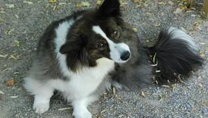 dog-having-a-scratch-for-fleas