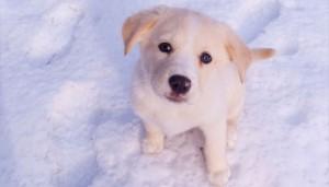 dog-insurance-lab