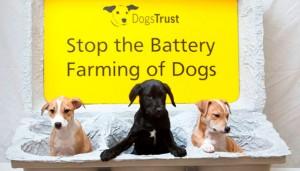 dogs-trust-advert