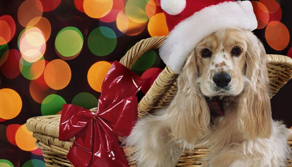 The '12 dogs of Christmas' find loving homes for 2014