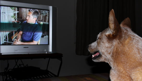 ITV1 programme to show a new side of dogs