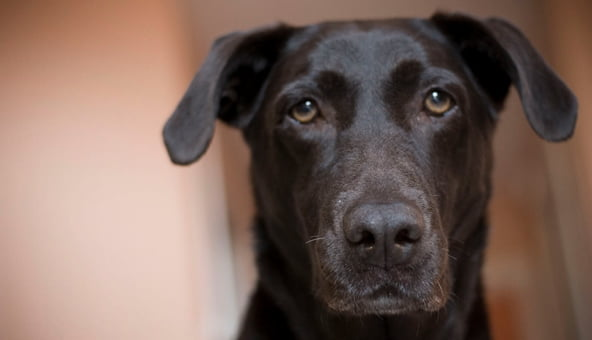 Still bundles of life left in 26-year-old dog