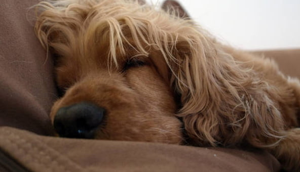 Bath charity initiative seeks to keep dogs warm this winter