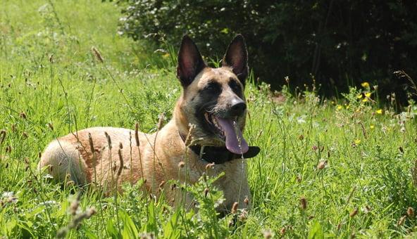 Dog lover develops innovative canine gadget
