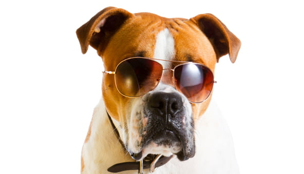 BVA reminds owners to keep pets cool