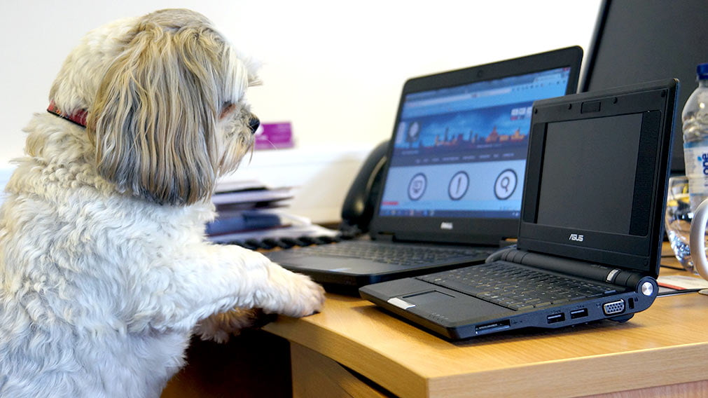 Distance learning courses company celebrates 'Bring your dog to work day'