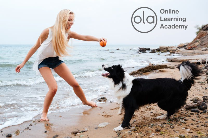 Dog Training Course Launched